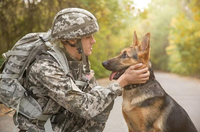 Military Pet Deployment